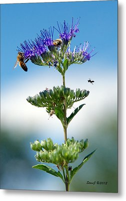 Big Bees Little Bee Metal Print