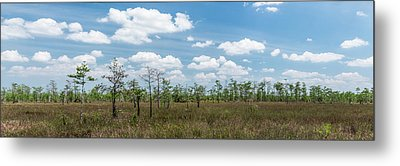 Metal Print featuring the photograph Big Cypress Marshes by Jon Glaser