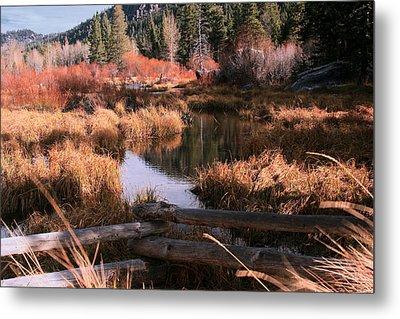 Big Meadow Creek Fall Metal Print by Larry Darnell