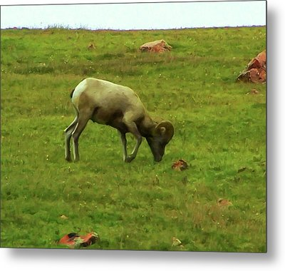 Metal Print featuring the digital art Bighorn Sheep Grazing by Chris Flees