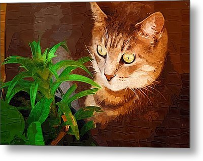 Metal Print featuring the photograph Bink by Donna Bentley