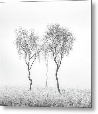 Birch Trio Metal Print