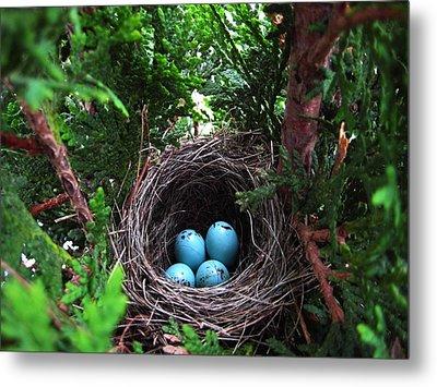 Bird Home Metal Print by Shirley Sirois