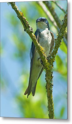 Metal Print featuring the photograph Bird In Tree by Rod Wiens