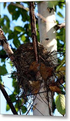 Bird Nest In Birch Tree Metal Print