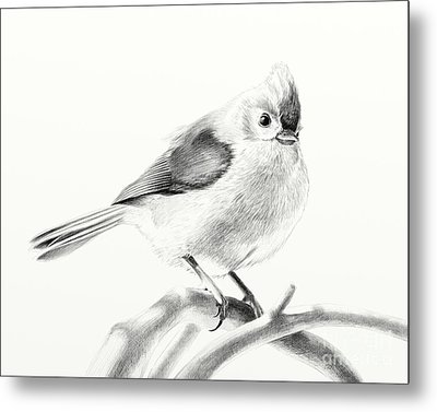 Metal Print featuring the drawing Bird On A Branch by Eleonora Perlic
