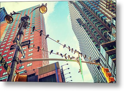 Birds In New York City Metal Print