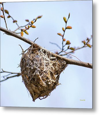 Metal Print featuring the photograph Birds Nest by Christina Rollo