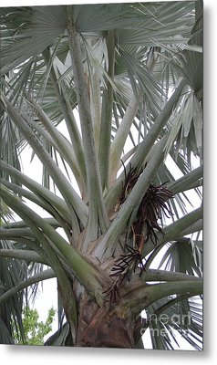 Bismark Palm Metal Print by Dodie Ulery