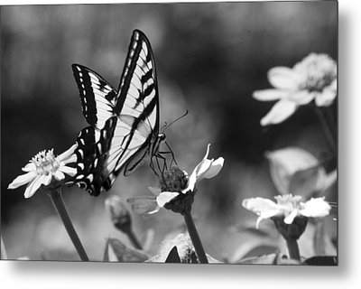 Black And White Butterfly On Flower Metal Print by Jim And Emily Bush