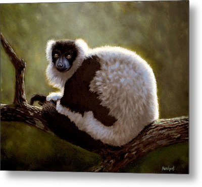 Black And White Ruffed Lemur Metal Print