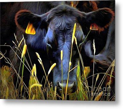 Black Angus Cow  Metal Print by Janine Riley