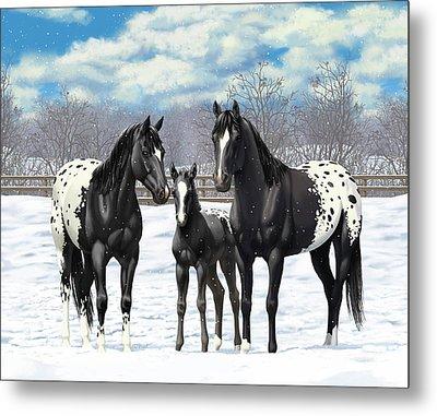 Black Appaloosa Horses In Winter Pasture Metal Print