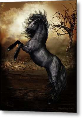 Black Beauty Metal Print by Shanina Conway
