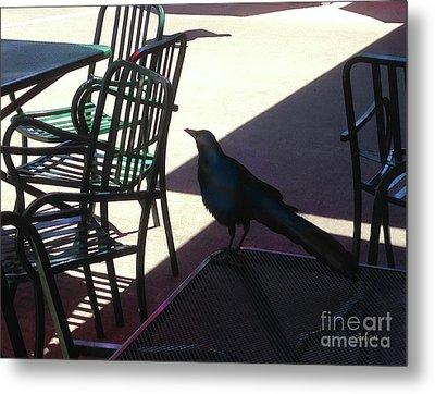 Black Bird At Central Market Metal Print by Felipe Adan Lerma
