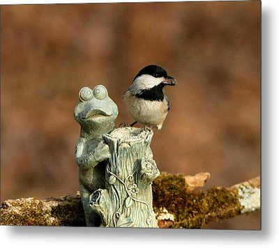 Black-capped Chickadee And Frog Metal Print