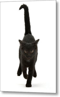 Black Cat On The Run Metal Print