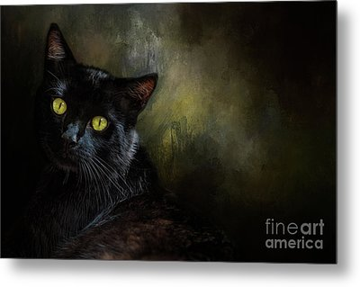 Black Cat Portrait Metal Print