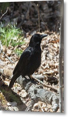 Black Crow In The Forest Metal Print