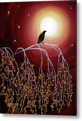 Black Crow On White Birch Branches Metal Print by Laura Iverson