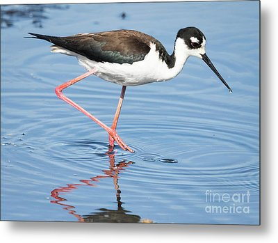 Metal Print featuring the photograph Black-necked Stilt Wading  by Ricky L Jones