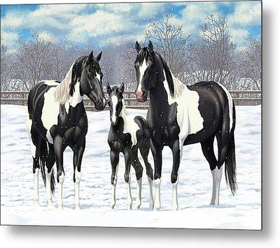 Black Paint Horses In Winter Pasture Metal Print