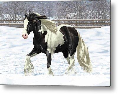 Black Pinto Gypsy Vanner In Snow Metal Print