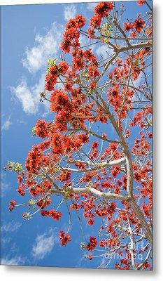 Blossoming Coral Tree Metal Print by Julia Hiebaum