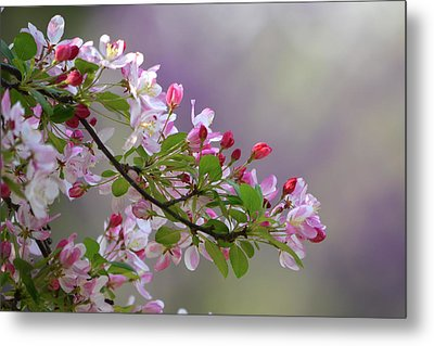 Blossoms And Bokeh Metal Print by Ann Bridges