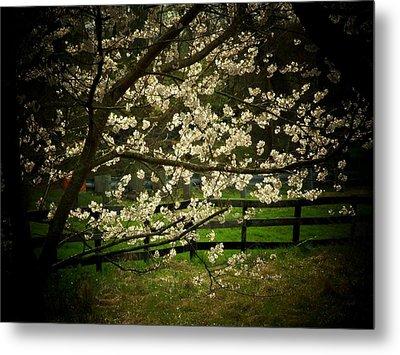 Blossoms Fence Metal Print by Michael L Kimble