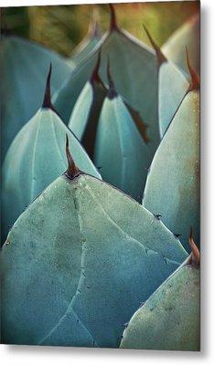 Blue Agave  Metal Print