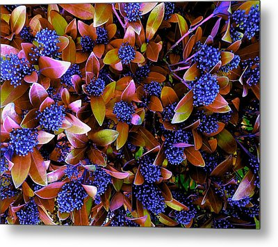 Blue Berries Metal Print