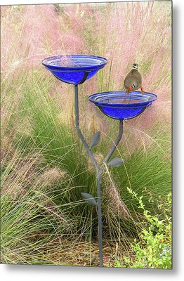 Metal Print featuring the photograph Blue Bird Bath by Rosalie Scanlon