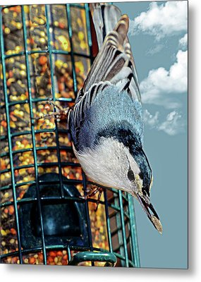 Blue Bird On Feeder Metal Print