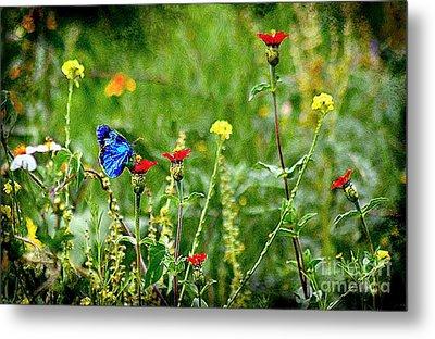 Blue Butterfly In Meadow Metal Print