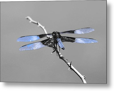 Metal Print featuring the photograph Blue Dragon by Cindy Manero