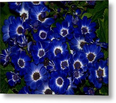 Blue Flowers Metal Print by Laura Allenby