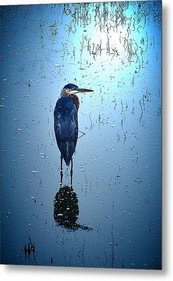 Blue Heron Metal Print by Loni Collins