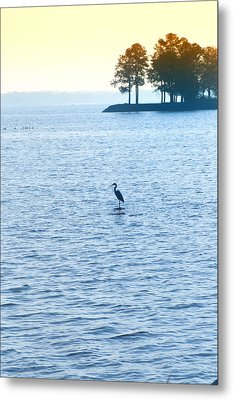 Blue Heron On The Chesapeake Metal Print by Bill Cannon