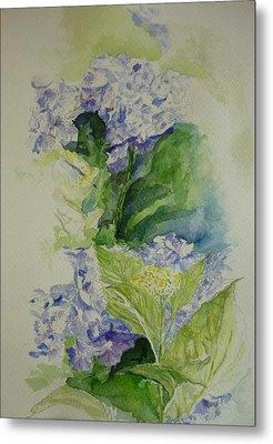 Blue Hydrangea Metal Print by Lizzy Forrester