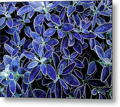 Blue Leaves Metal Print