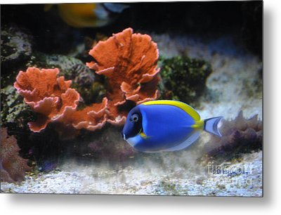 Blue Tang Fish And Coral Metal Print by DiDi Higginbotham