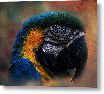 Blue Throated Macaw 003 Metal Print