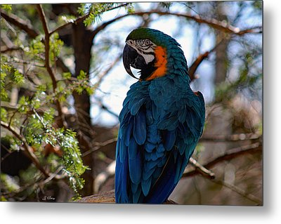 Blue Throated Macaw Metal Print