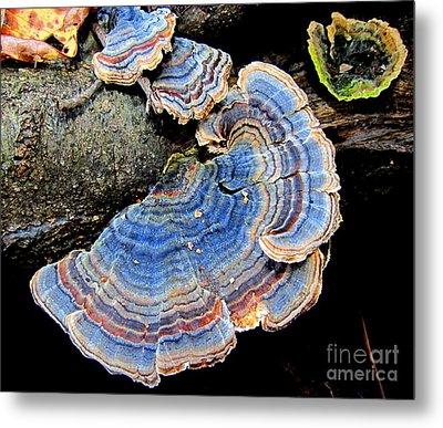 Blue Turkeytail Fungi Metal Print