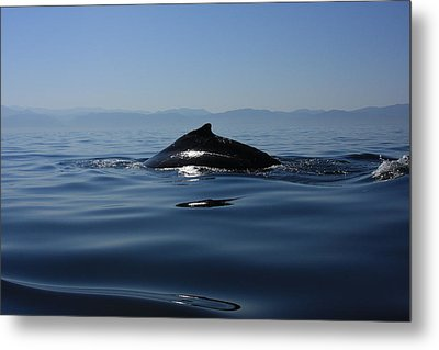 Metal Print featuring the photograph Blue Waters by Nicola Fiscarelli