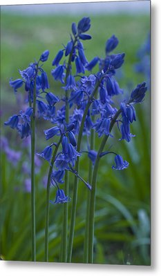 Metal Print featuring the photograph Bluebells by Rob Hemphill