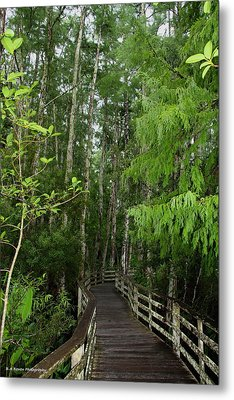 Boardwalk Through The Bald Cypress Strand Metal Print by Barbara Bowen