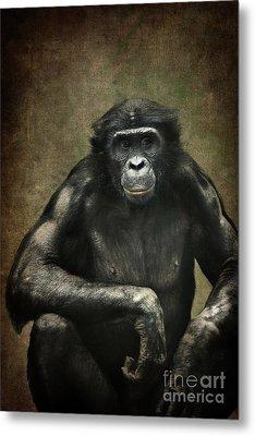 Bonobo Metal Print
