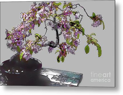 Bonsai Beauty Metal Print by Linda  Parker